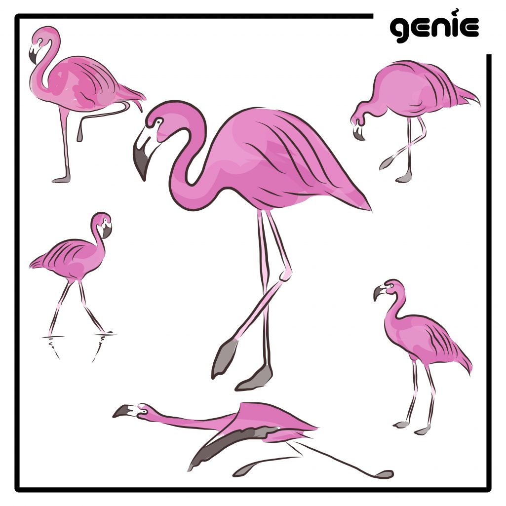 Flamingo Vector Graphic Illustration Hand Drawn Drawing Clipart ...
