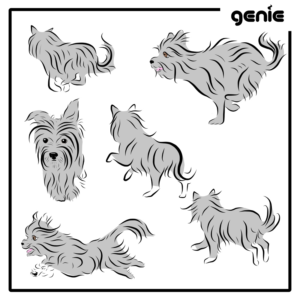 Yorkshire Terrier Yorkie Dog Vector Graphic Illustration Hand Drawn Drawing Sketch Royalty Free Digital Instant Download Pdf Svg Png